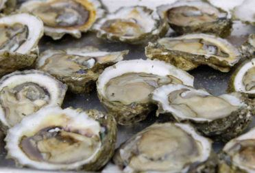 Fresh Shucked Oysters are a Daily Happening